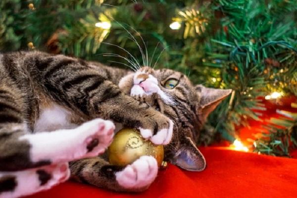 christmas-greeting-typos